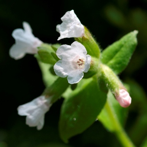 Dainty Blooms - Copyright R.Weal 2011