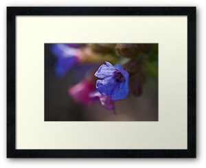 Example Framed Wealie Photographic Print